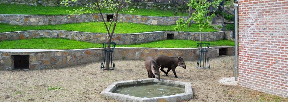 2015-04-21-tapiri-zoran-rajic-a