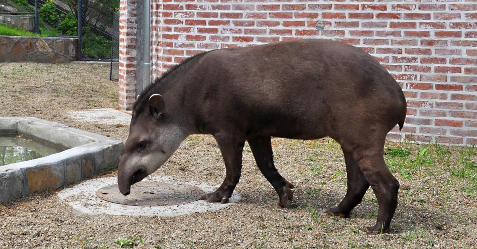 2015-04-21-tapiri-zoran-rajic-b