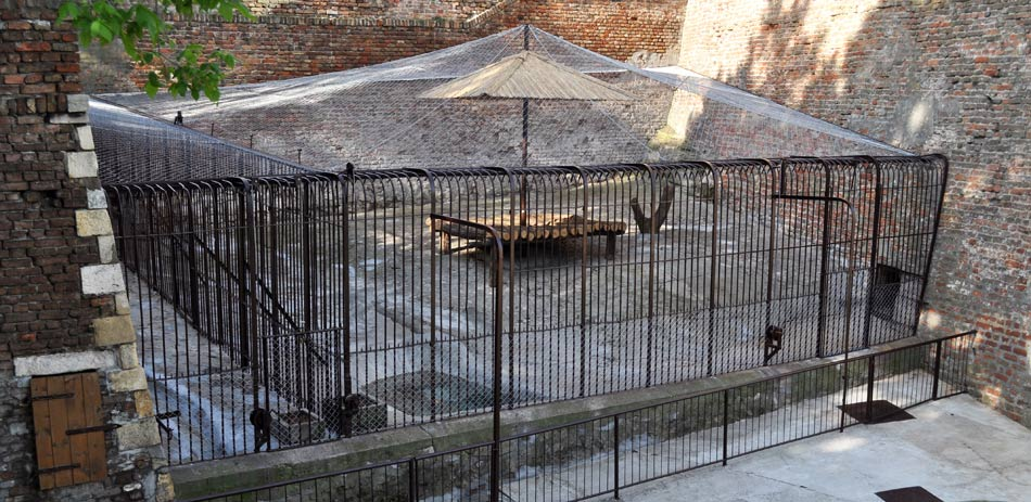 prostor-za-jaguara-zoran-rajic