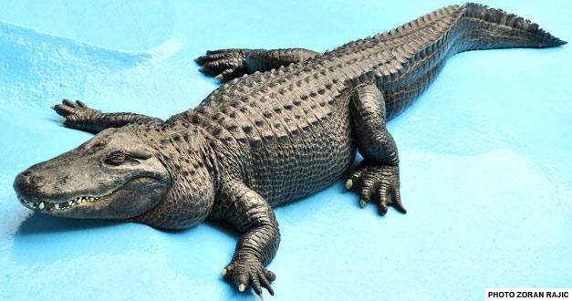 objekat za reptile