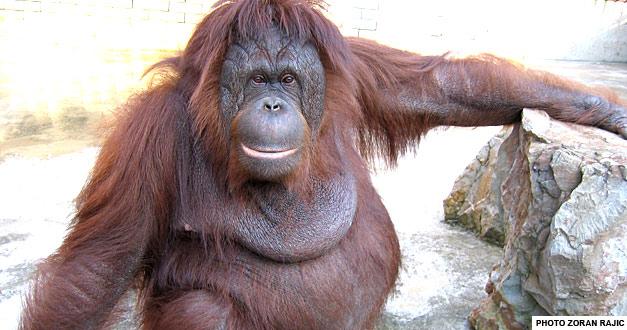 objekat za primate