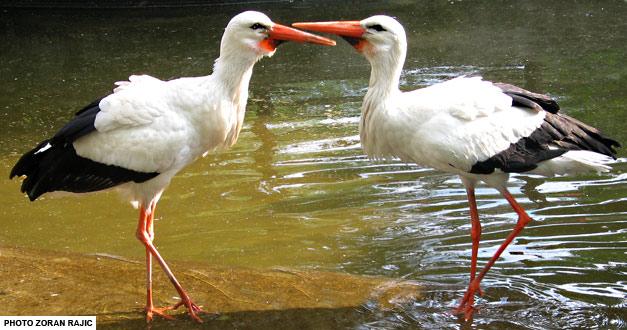centralni bazen, bela roda - beo zoo