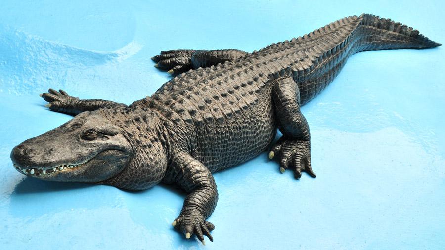 beo_zoo_vrt_aligator_muja1