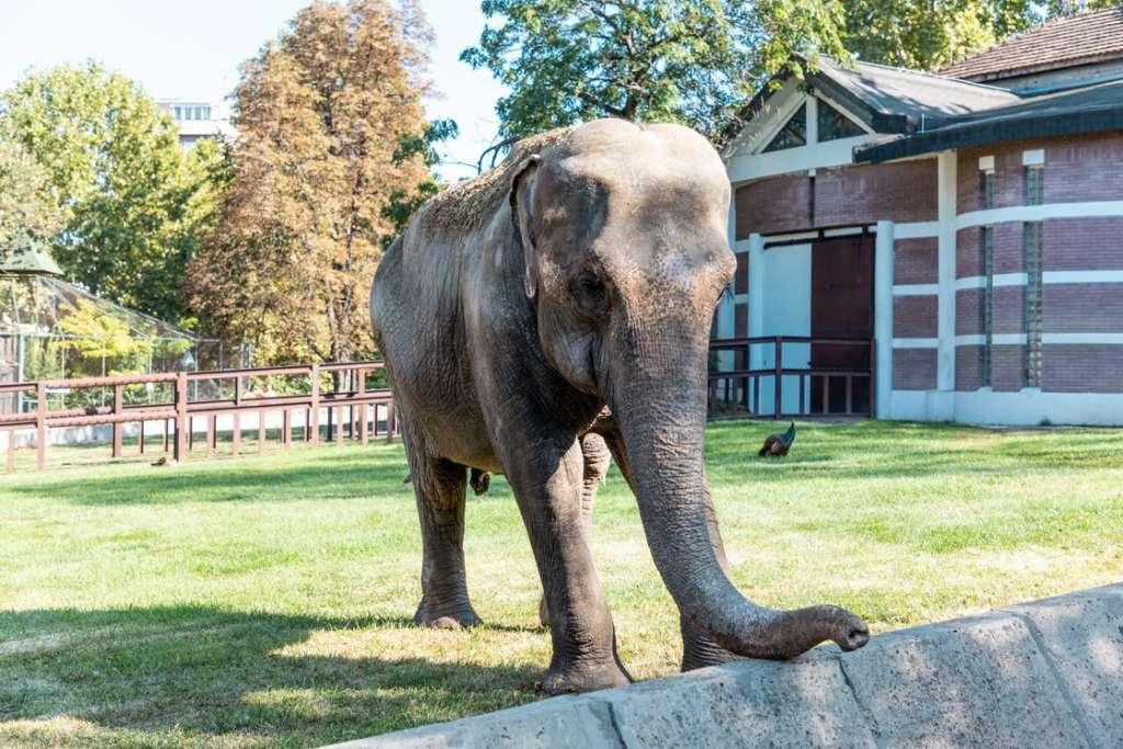 Beogradski Zoo Vrt